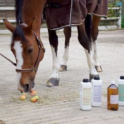 Shooting NHP • aliments complémentaires pour le cheval • aux plantes À retrouver sur notre site et chez @sellerielesigny