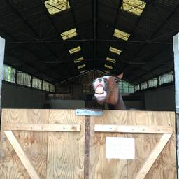 Y en a un qui cherche à faire le malin 🤪❤️  #horse #mountain #horselover #equestrian #equestrianlife #equestrianlifestyle #horsephotograpy #pony #horseofinstagram #holiday #nature