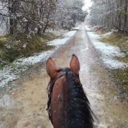 Joyeuses fêtes de fin d'année 🎄! #christmaspony #cheval #cavalier