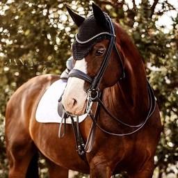 Avis aux dresseurs 👉Qui laisse sa bride au placard pour l'été ? 🙋♀️ 📷 @janasiegristfotografie  #horse #horsejumping #horselover #equestrianlife #equestrianlifestyle #holidayswithmyhorse #summer #pony #dressagehorse #horserider #horsephotography #horselife #horselifestyle