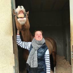 Mood du jour 😝  #horse #cso #horselover #dressagehorse #instaponey