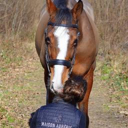 Bientôt l'arrivée du Printemps 🌼 - Pré-commandes pour le Horse Freeverm ouvertes ! 📷 @ddy.photograph merci pour cette belle photo 😎  #horse #horsejumping #horselover #equestrianlife #equestrianlifestyle #holidayswithmyhorse #summer #pony #dressagehorse #horserider #horsephotography #horselife #horselifestyle