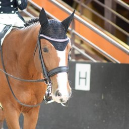 Championnats de France dressage amateur au @pole_europeen_du_cheval.  Qui y était ?