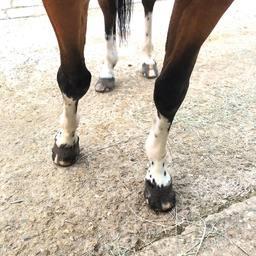 Comment s'appelle ce type de balzane : mouchetée, tâchetée ou herminée ?  #horse #mountain #horselover #equestrian #equestrianlife #equestrianlifestyle #horsephotograpy #pony #horseofinstagram #holiday #nature
