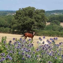 Résultat jeu concours : Bravo à @swan_golden_pony & @perrine.vrg qui remporte toutes les 2 le lustrant #coatsheen et le peigne #solocomb ! Merci à tous d'avoir participé 😍  #horse #horselife #equestrianlife #equestrianlifestyle #pony #dressagehorse #jumpinghorse #horseofinstagram #picoftheday #pferd #sellefrancais #dressage #dressagecompetition #paris